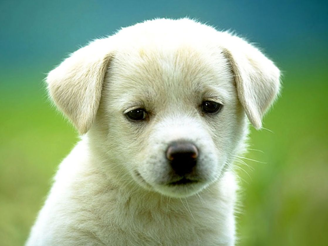Cute little dog pictures 1
