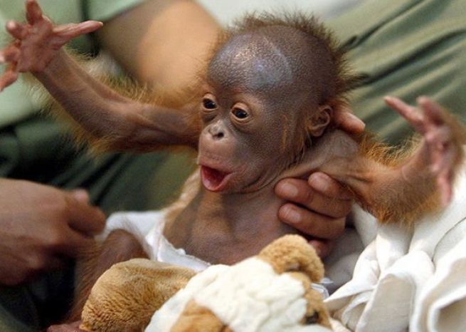 cute monkey pictures 4