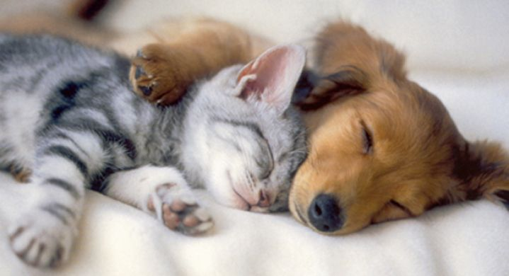 Cute Puppies And Kittens Together