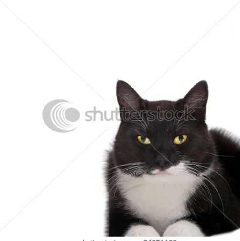 Black and white cats with yellow eyes pictures 2