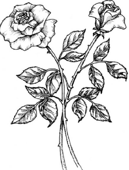 ilii00ezy black and white rose drawing