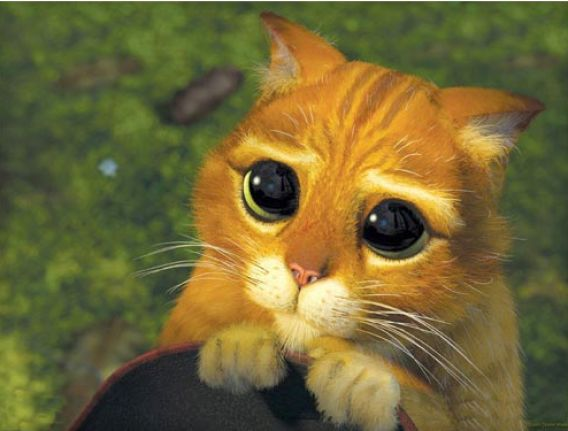 Cat from shrek sad face pictures 1