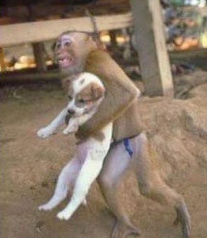 funny animals with captions pictures. Cute and funny animals