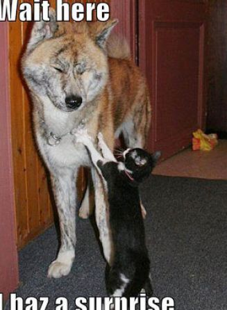 Cute and funny cats and dogs pictures 4