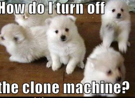 Cute and funny pictures of puppies pictures 1