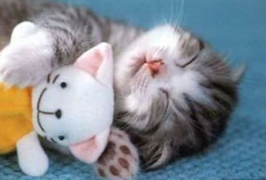 Cute baby kittens sleeping pictures 3