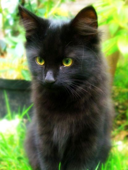 cute black cats with green eyes car interior design