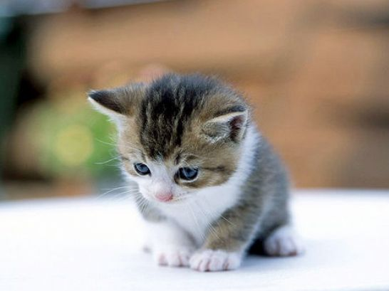 cute new born kittens pictures 4
