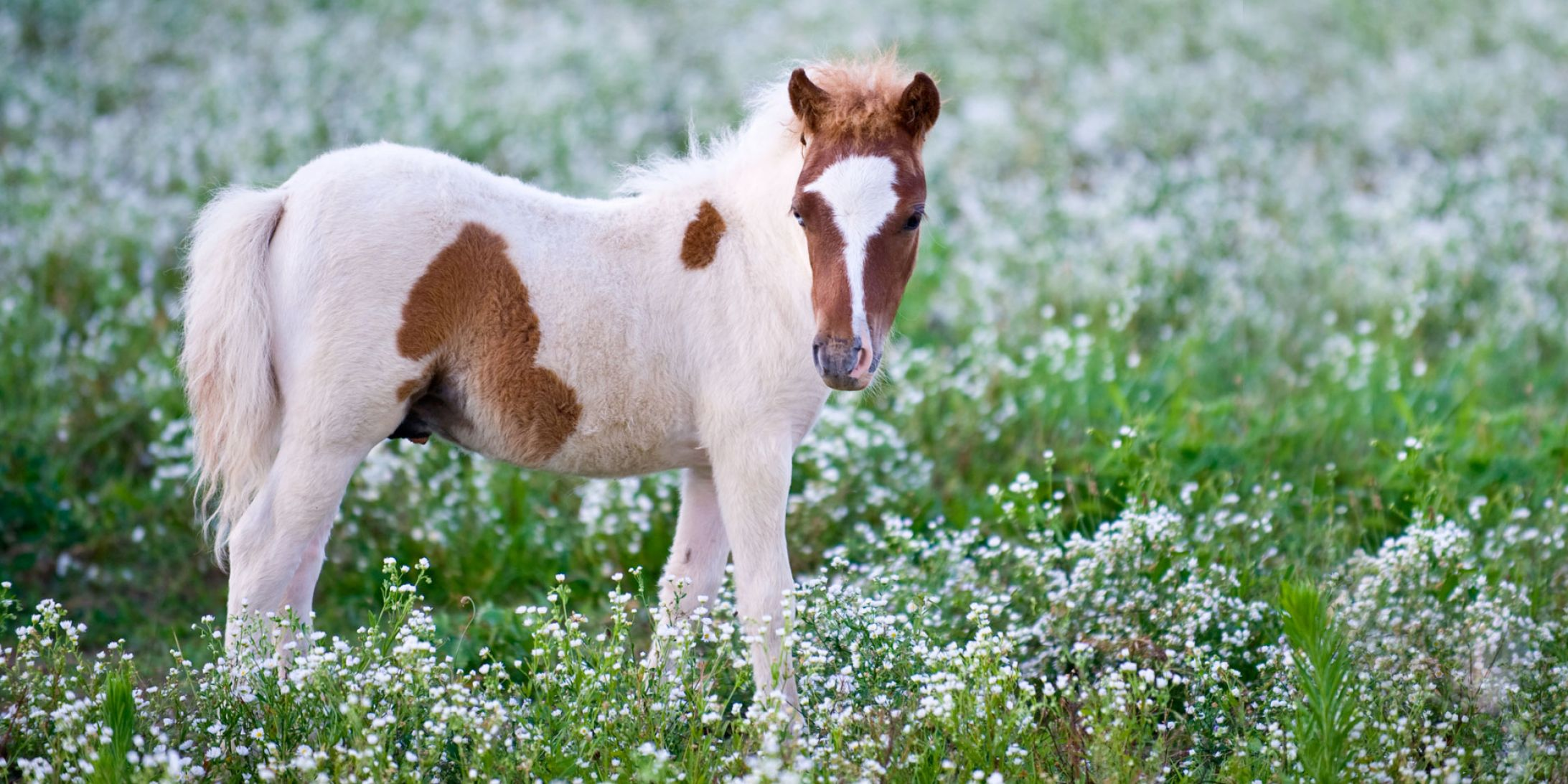 horses cute ponies horse pony too animal rabbits becca pm posted yahoo