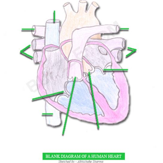 fill in the blank heart diagram 1