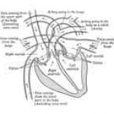 fill in the blank heart diagram 2