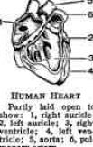 fill in the blank heart diagram 4