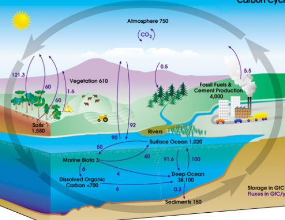 Search Results for: Water Cycle Fill In The Blank Diagram