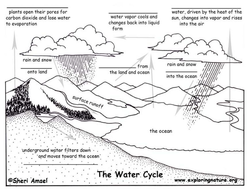Search Results Water Cycle Blank Fill Diagram