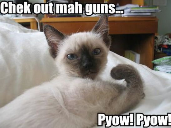Funny Pics Cats With Guns Pictures