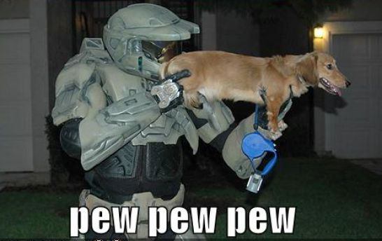 animals with guns funny. Guns funny pictures funnyden