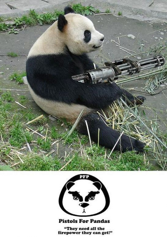 funny dog pics with guns - photo #27