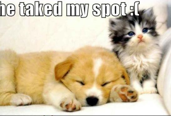 Funny Pics Puppies And Kittens Pictures