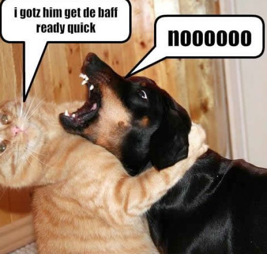 Funny animal pictures dogs and cats together
