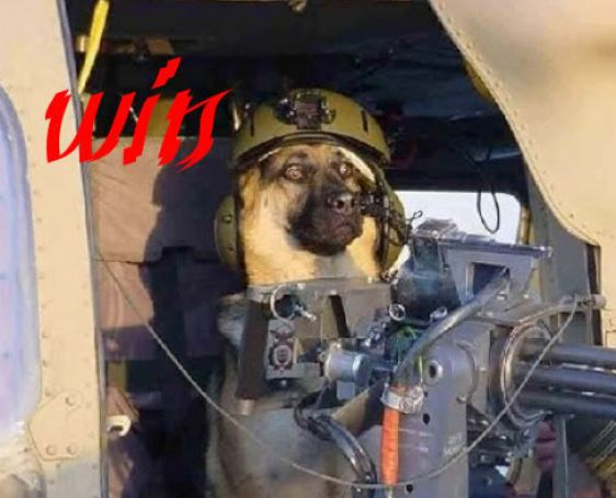 hahastop Funny Pictures Dogs With Guns Funny Picture : Dogs With Guns Posted