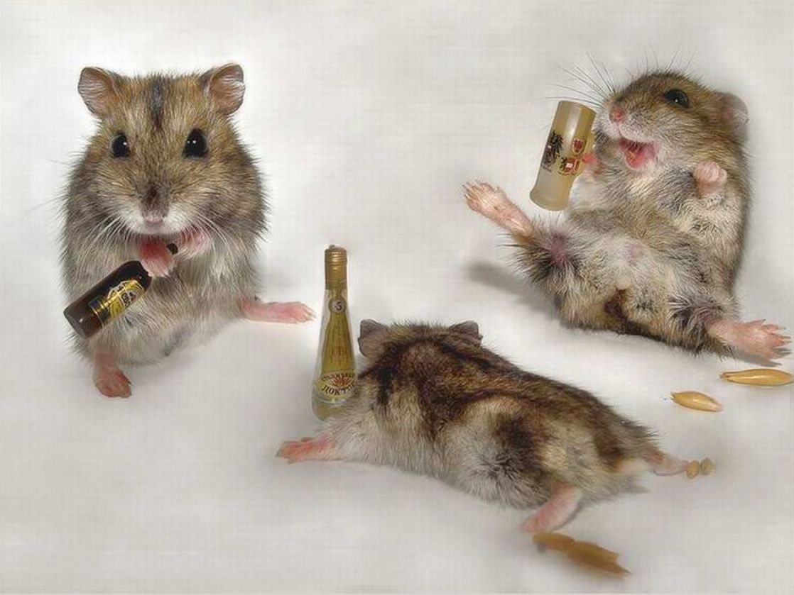Funny pictures of drunk animals pictures 1