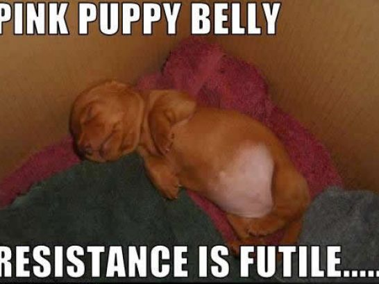 puppies pictures funny. Puppies funny pictures