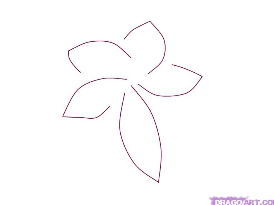 Flower Petals Line Drawing : How to draw petal flower