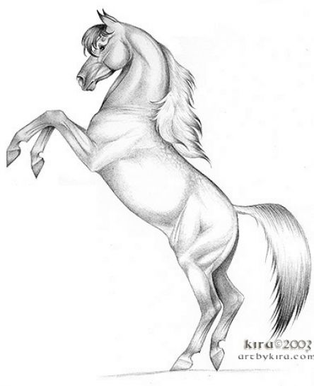 animals drawing, Rearing Horse - How to draw Rearing Horse by
