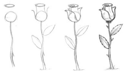 How to draw a rose for beginners step by pictures 3