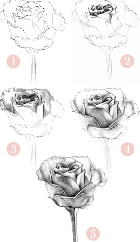 How to draw a rose step by step pictures 4