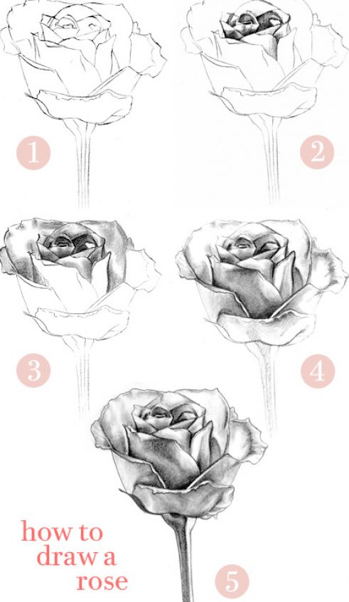 Monster Designs: how to draw a rose with a heart