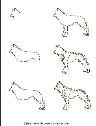 How to draw a wolf body - photo#12