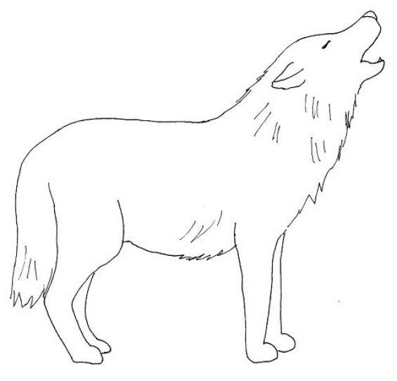 How to draw a wolf body - photo#1