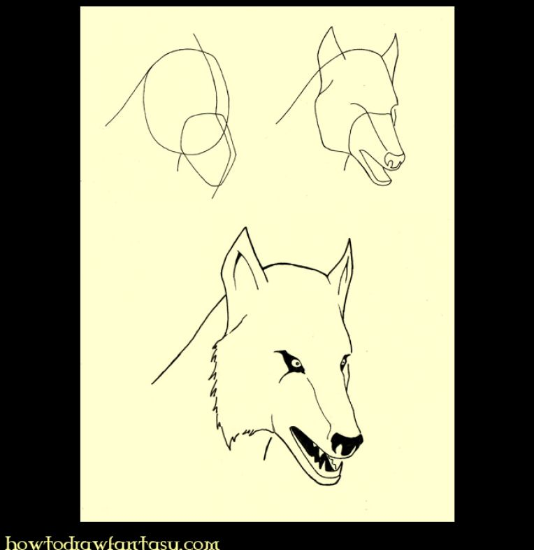 How to Draw Wolves The StepbyStep Wolf Drawing Book