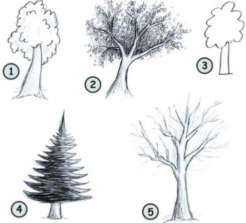 How to draw easy trees pictures 1Easy Pictures To Draw Of Trees
