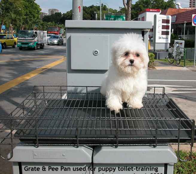 Potty training baby for How to train your dog to pee