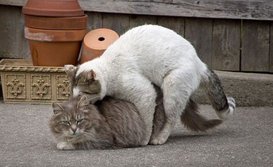 Horses Mating Hard http://free.bridal-shower-themes.com/pics-of-cats-mating