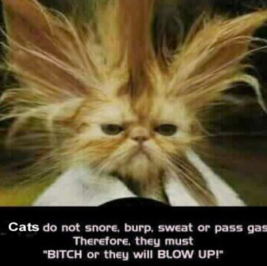 Funny Cat Hair Pictures