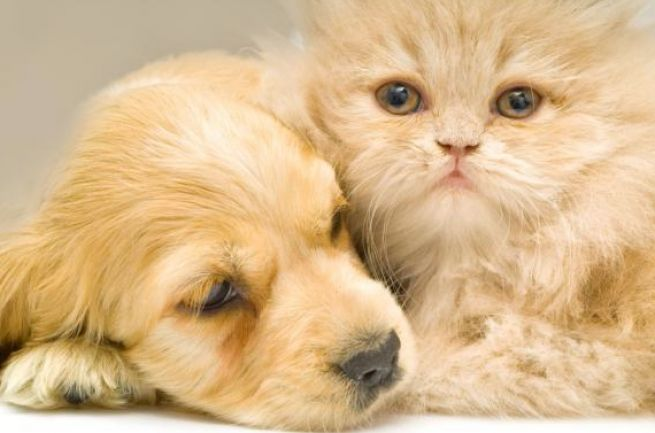 Like cats and dogs cat and dog pictures cute puppies
