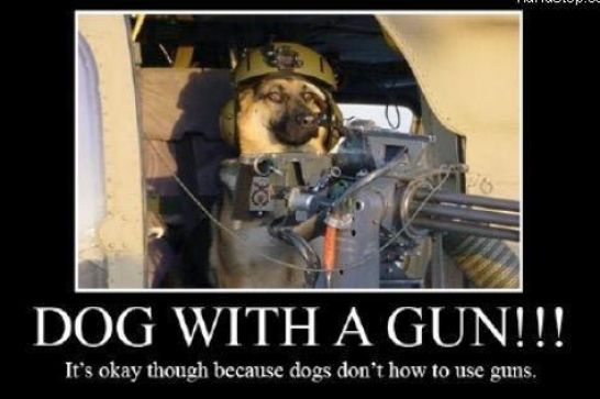 Funny Chicken Police: Gundogs And Chickens