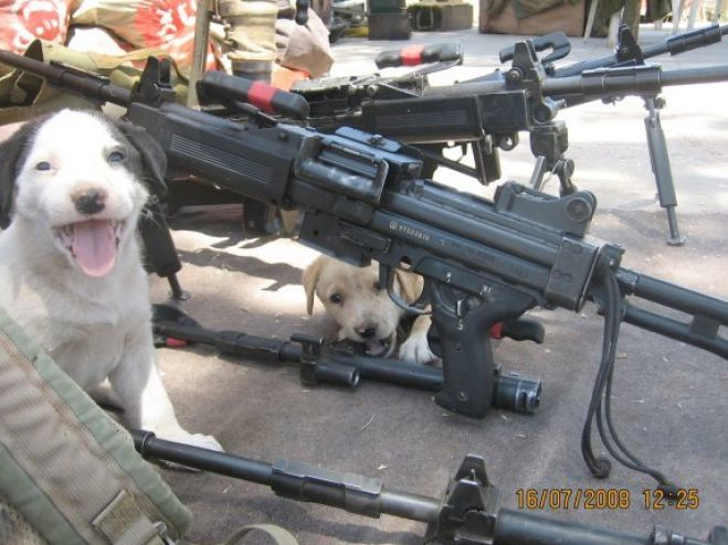 Funny Pics Of Dogs With Guns Gundogs and chickens -...