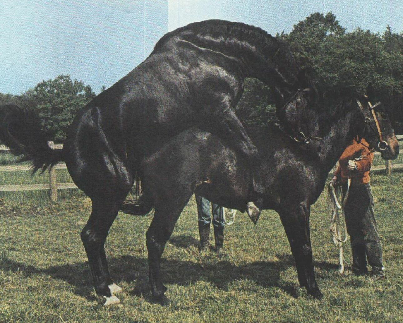 Pics Of Horses Breeding Pictures
