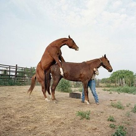 Pics Of Horses Mating Pictures