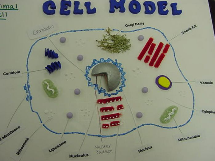 picture of animal cell labeled. Animal cell picture nwu natsci