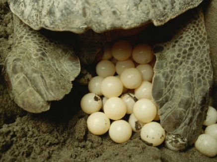 pictures of animals that lay eggs 3