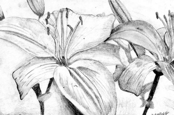 The gallery for how to draw a hawaiian flower step by for How to draw flo