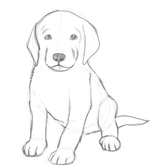 Pictures of puppies to draw pictures 2