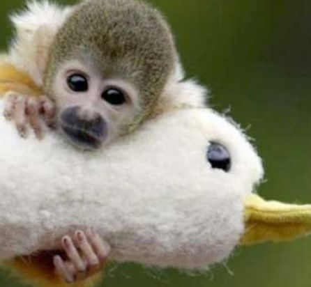 Really cute monkeys pictures - photo#8