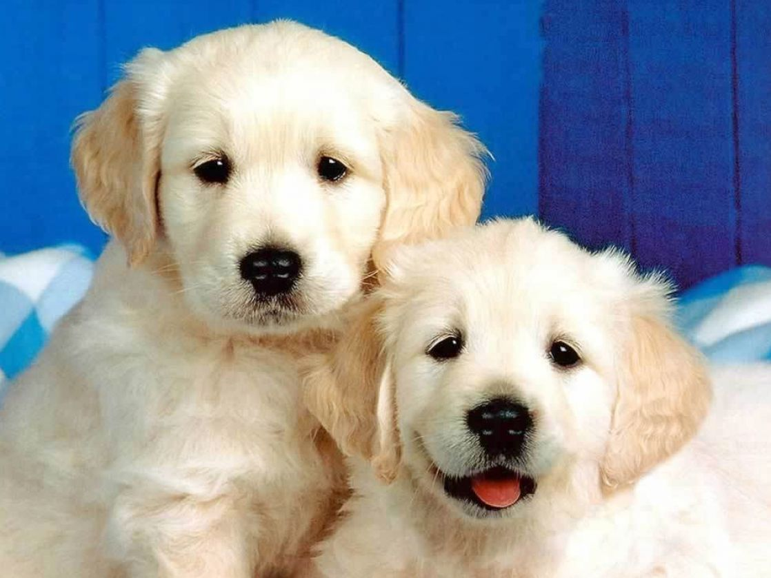 Really cute dogs and cats pictures 3