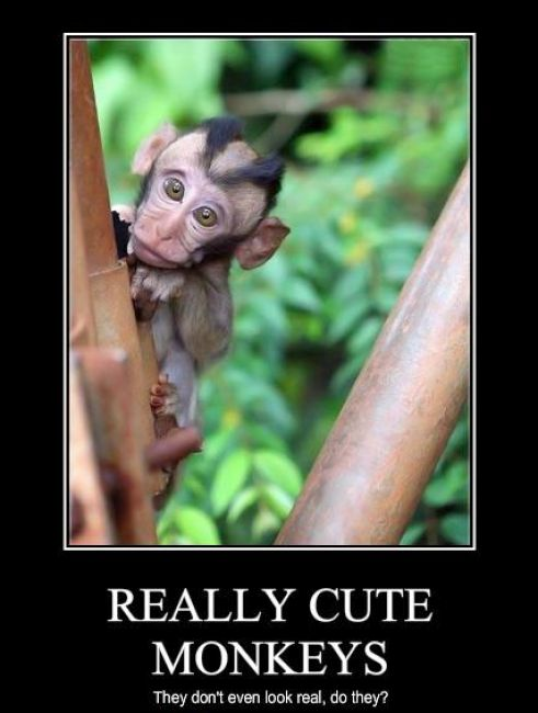 Check out thousand of funny pictures including Cute Monkey Picture at